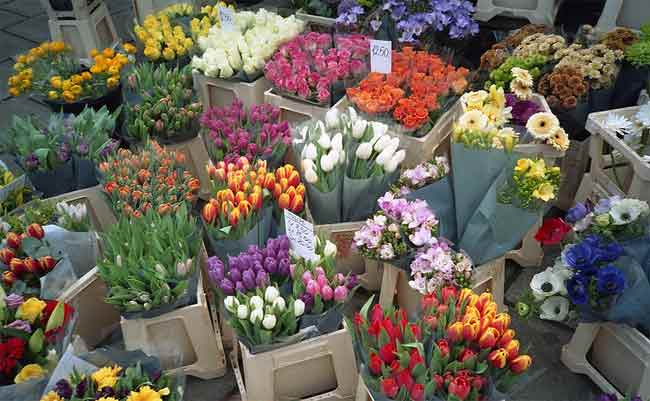 How to choose fresh Cut flowers